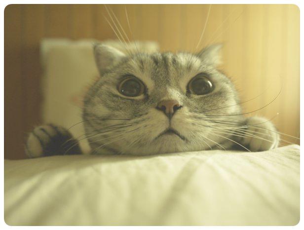 【生活】meow の 雜記 – Nov ' 11